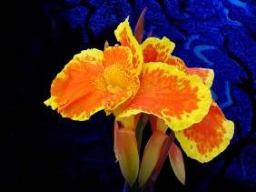 Stolen Moment - Flowers - Amazing Pictures by Michael Taggart Photography