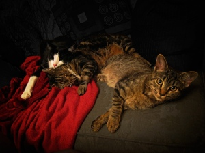 Bedroom eyes - cats - Amazing Pictures by Michael Taggart Photography