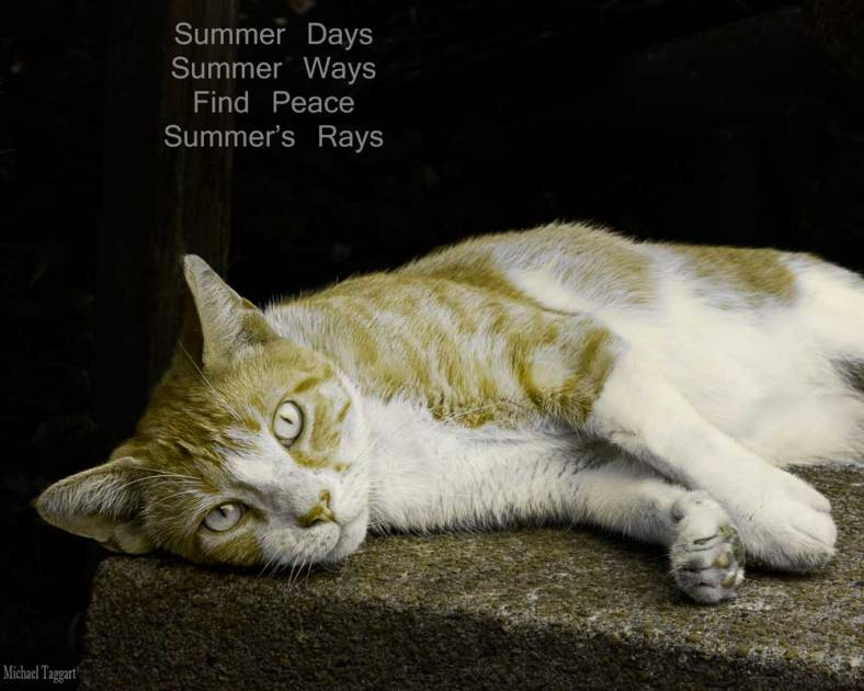 Ode to Summer Napping - cats - Amazing Pictures by Michael Taggart Photography