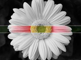 Color Belt - Flowers - Amazing Pictures by Michael Taggart Photography