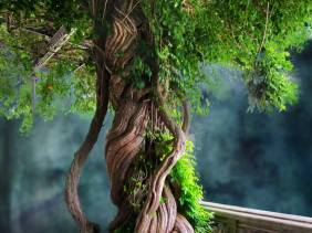 Father Tree - Trees - Amazing Pictures by Michael Taggart Photography