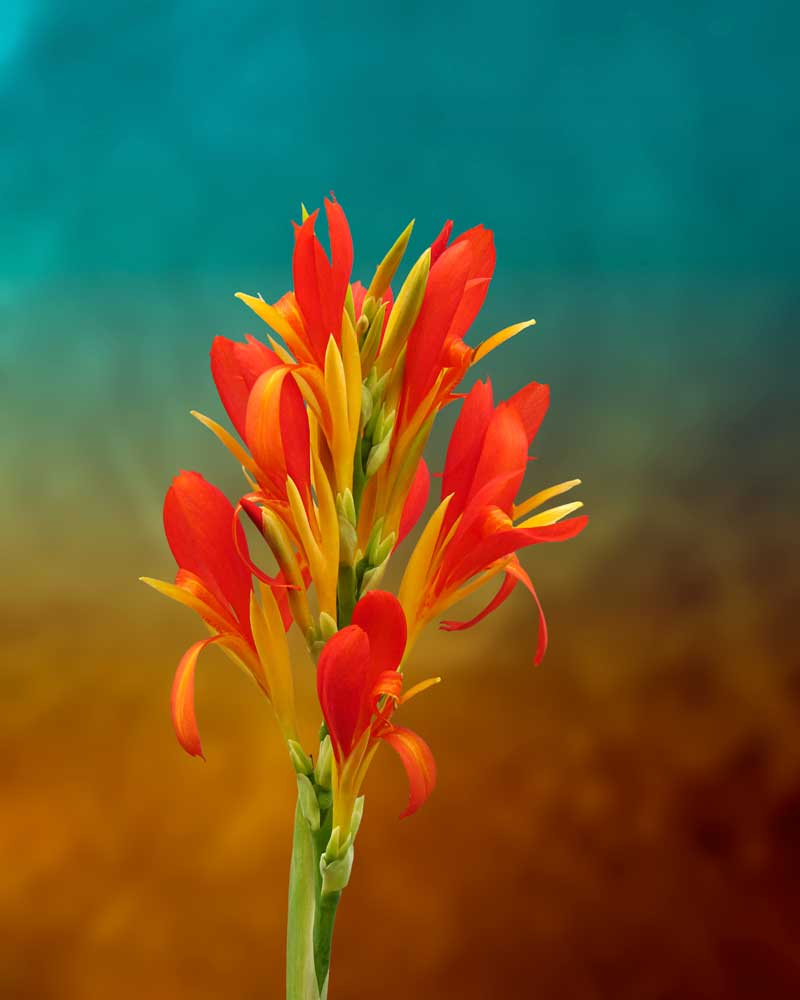 Orange Spray of Flowers - Flowers - Amazing Pictures by Michael Taggart Photography