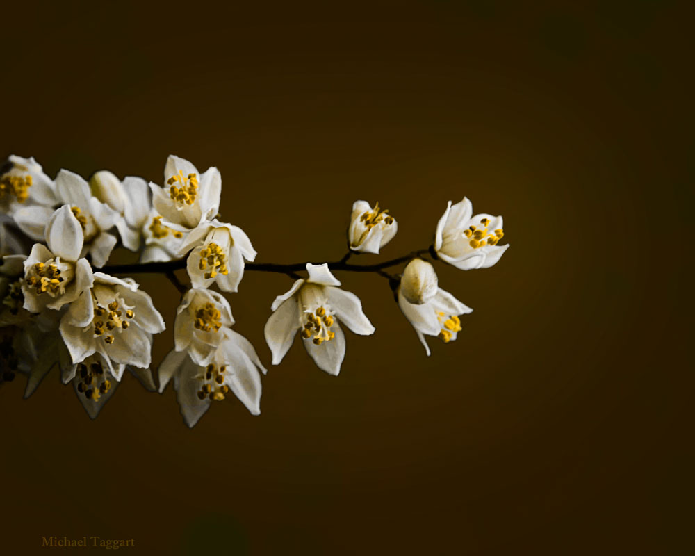 Seeking the Light - Flowers - Amazing Pictures by Michael Taggart Photography