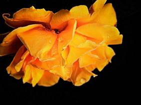 Shine Until Tomorrow - Flowers - Amazing Pictures by Michael Taggart Photography