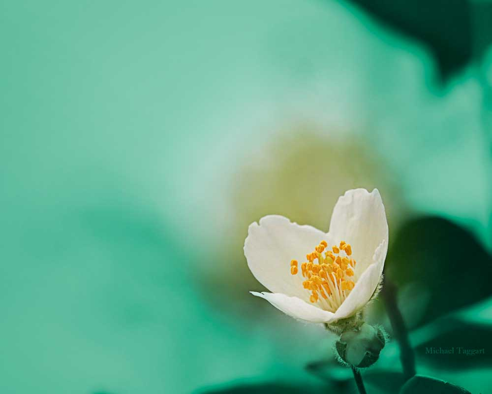 This Little Light - Flowers - Amazing Pictures by Michael Taggart Photography