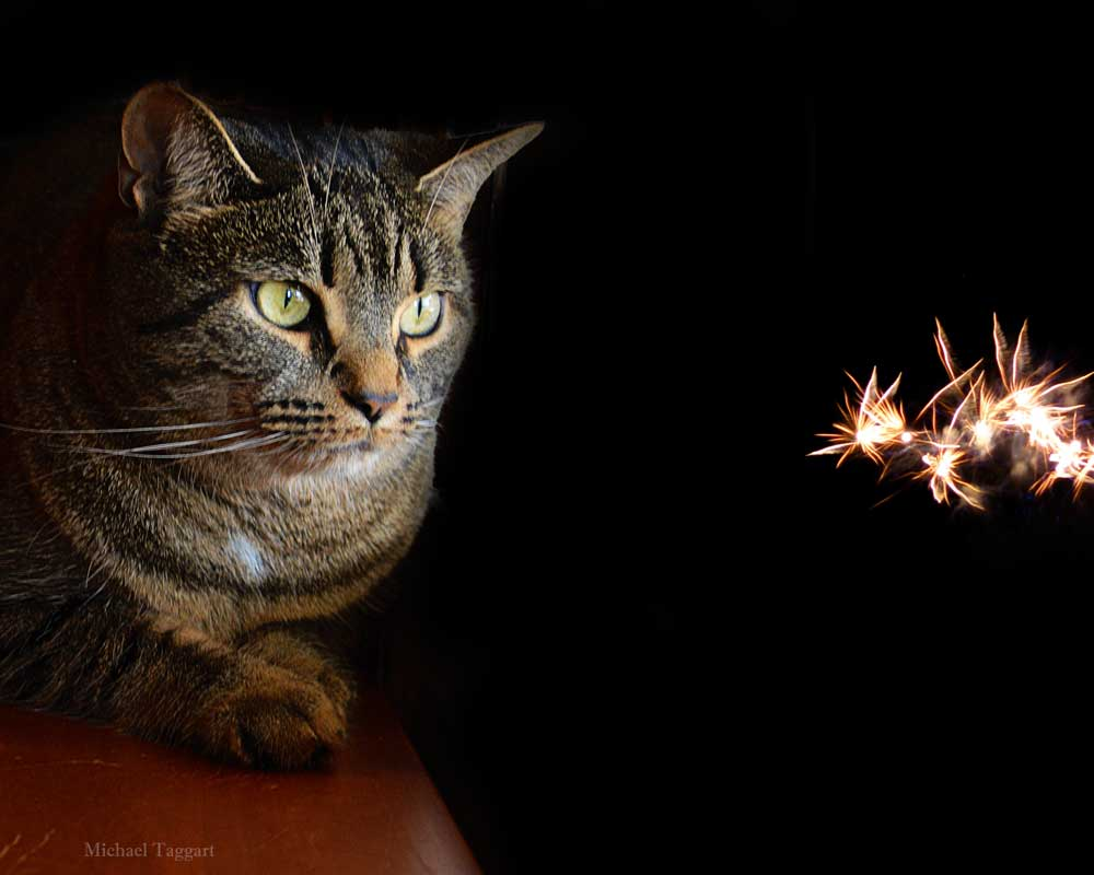 Watching Fairies - Cats - Amazing Pictures by Michael Taggart Photography