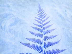 Frosted Fern - Flowers - Amazing Pictures by Michael Taggart Photography