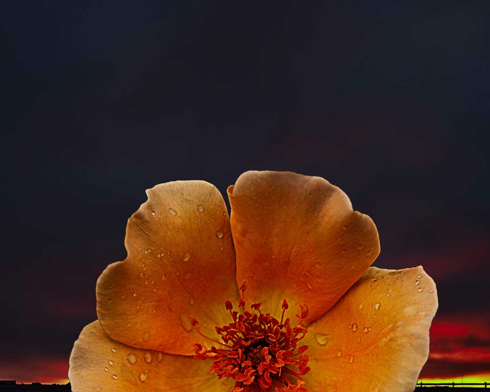 Good Morning Flower - Flowers - Amazing Pictures by Michael Taggart Photography