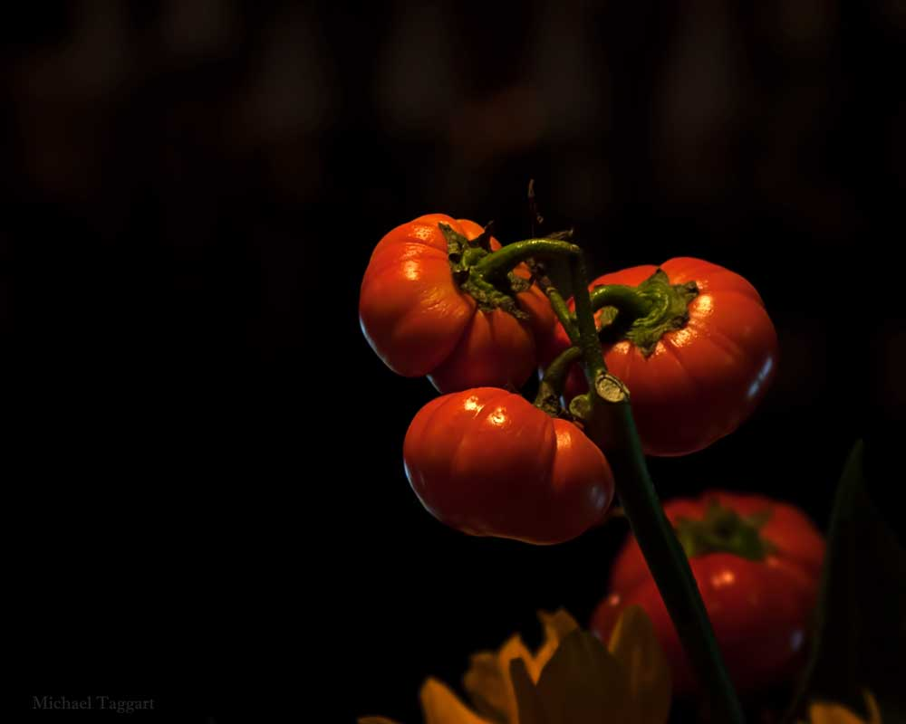 Halloween Fruit of the Vine - Flowers - Amazing Pictures by Michael Taggart Photography