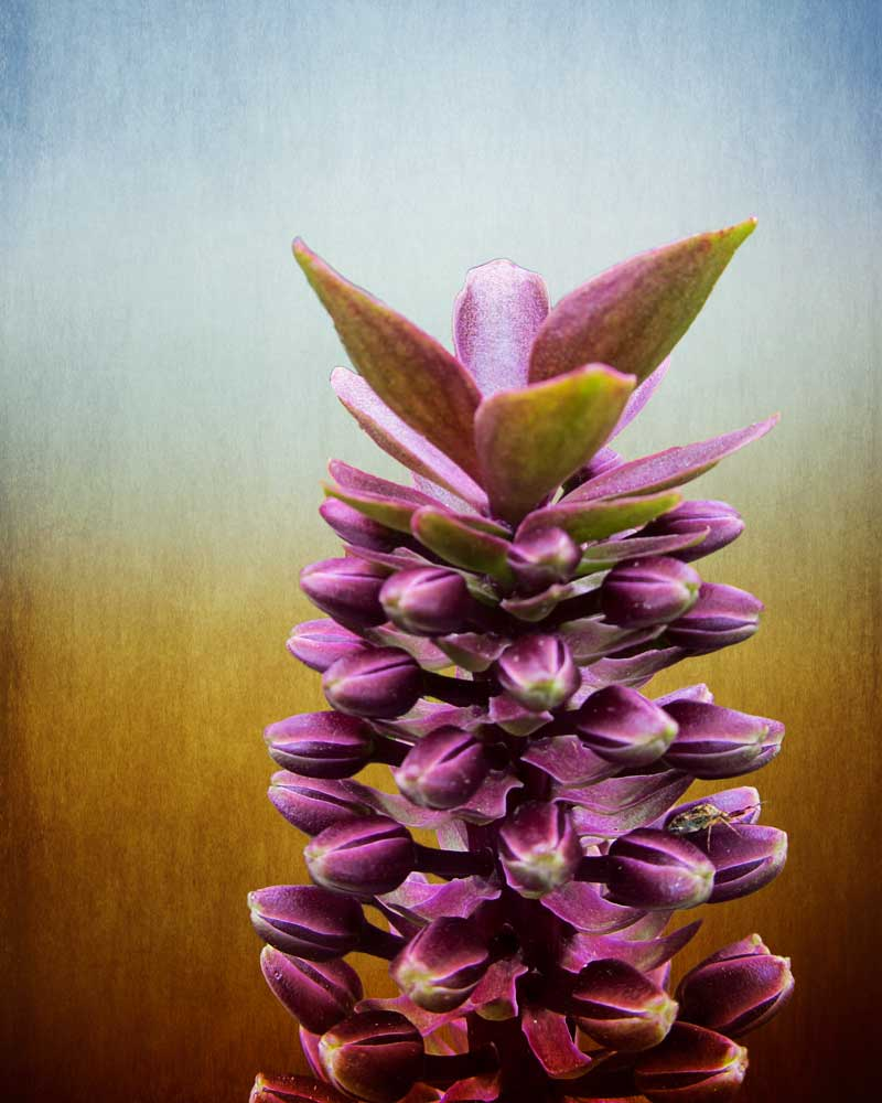 Happy Purple Pods - Flowers - Amazing Pictures by Michael Taggart Photography