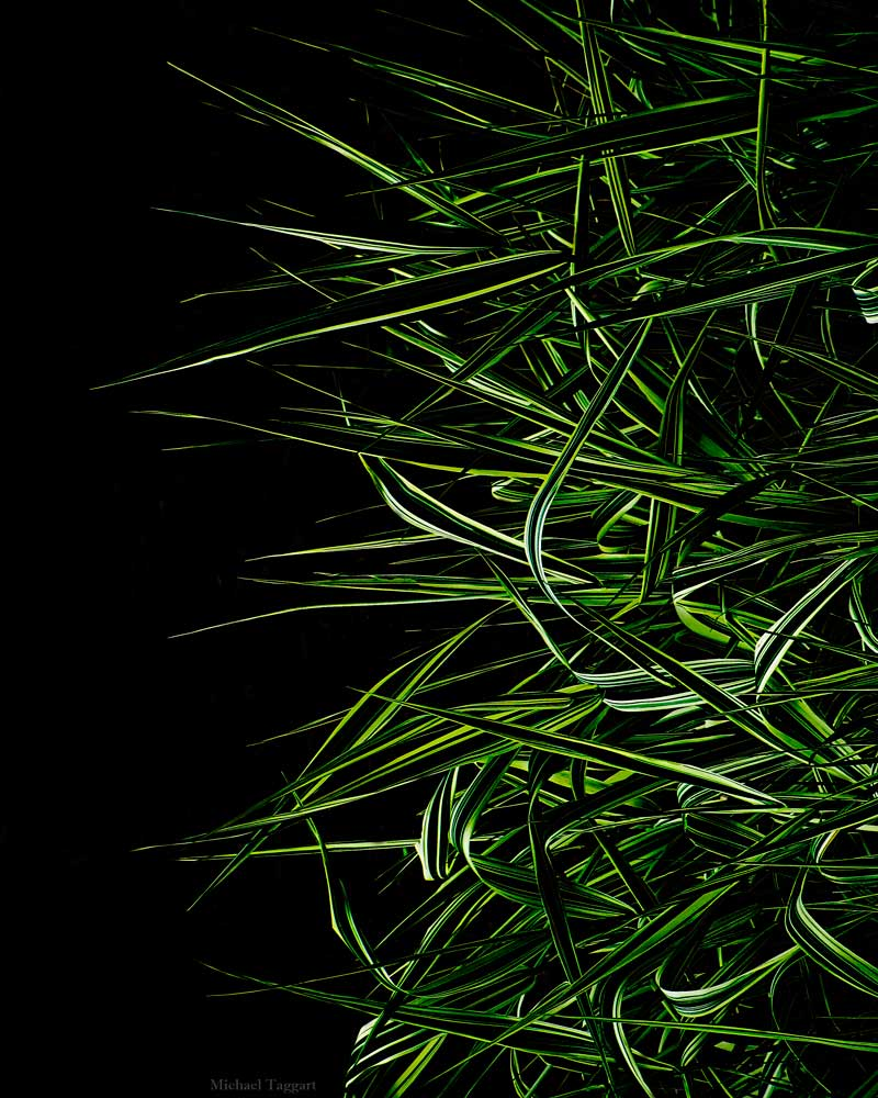 The Shape of Grass - Flowers - Amazing Pictures by Michael Taggart Photography