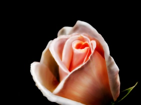 - Flowers - Amazing Pictures by Michael Taggart Photography