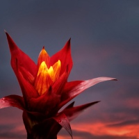 Morning Fire - Amazing Pictures Flowers by Michael Taggart Photography