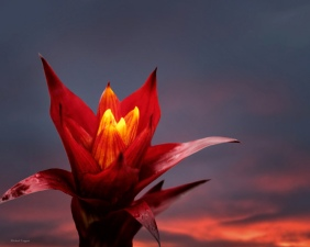Morning Fire - Flowers - Amazing Pictures by Michael Taggart Photography
