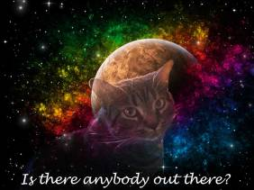Is There Anybody Out There - cats - Amazing Pictures by Michael Taggart Photography