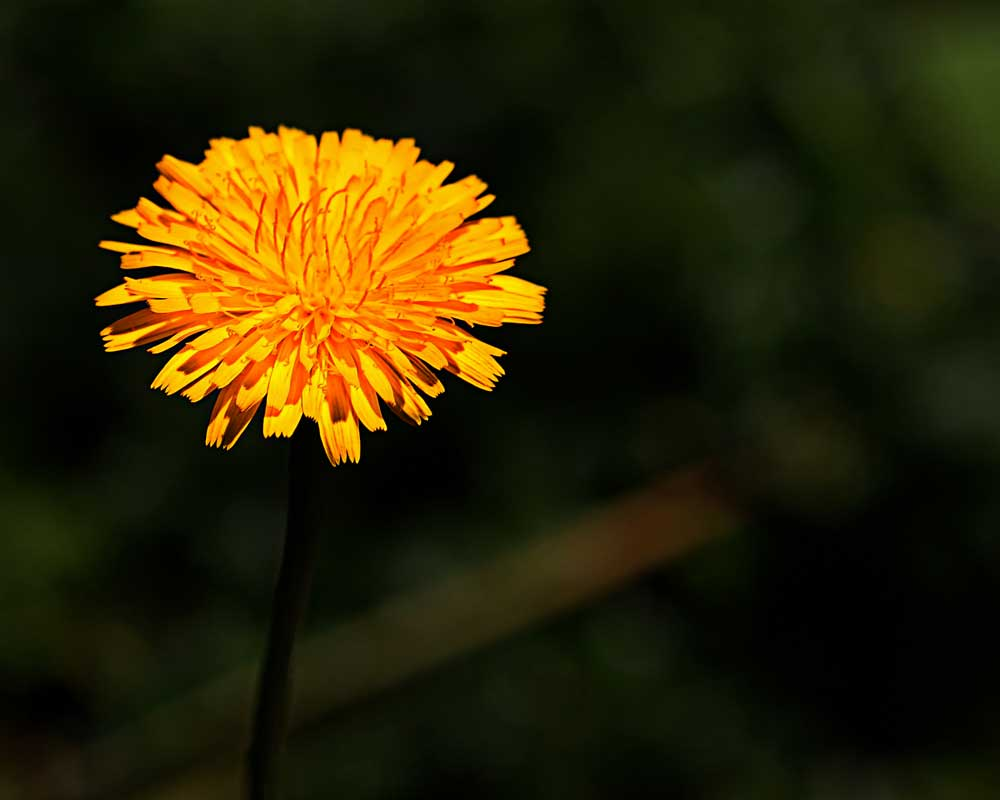 Grow a Little Sunshine - Flowers - Amazing Pictures by Michael Taggart Photography