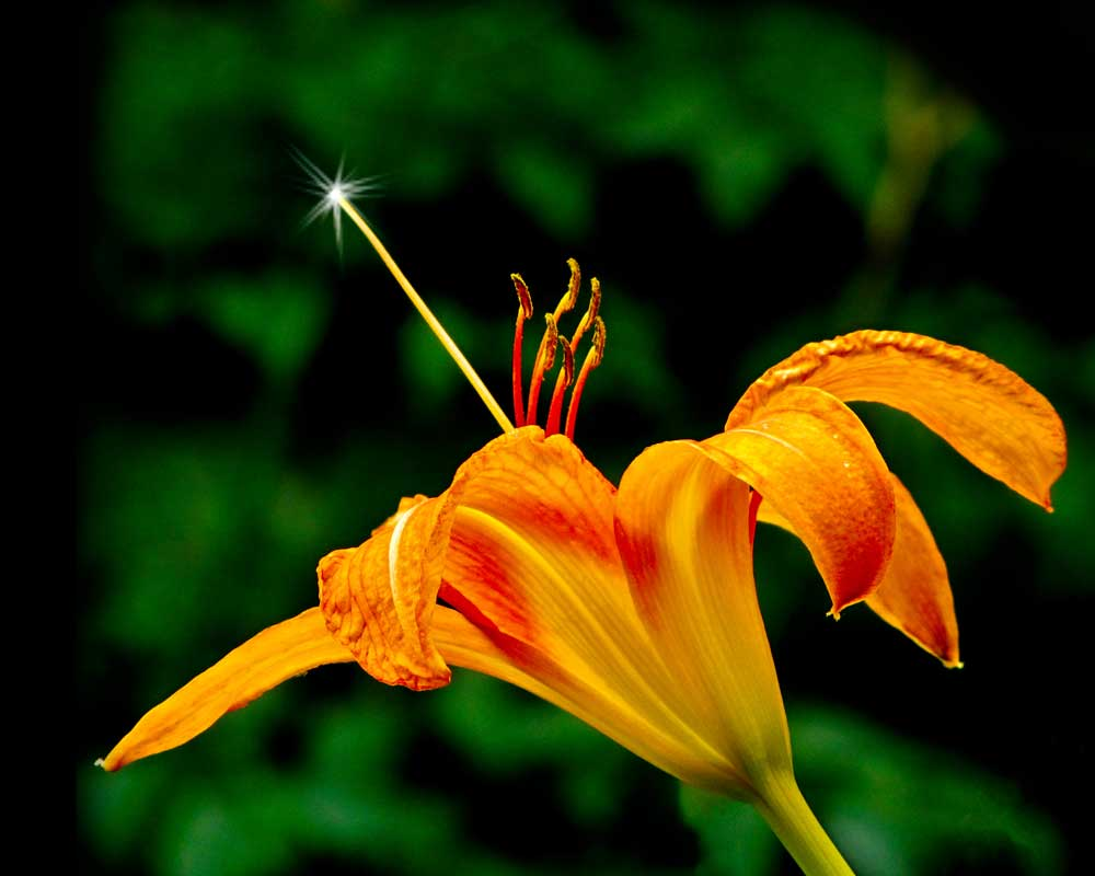 Magic Wand - Flowers - Amazing Pictures by Michael Taggart Photography