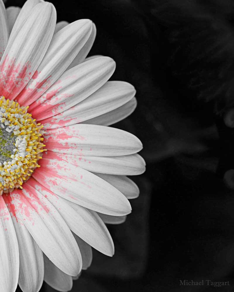Splash of Color    - Flowers - Amazing Pictures by Michael Taggart Photography