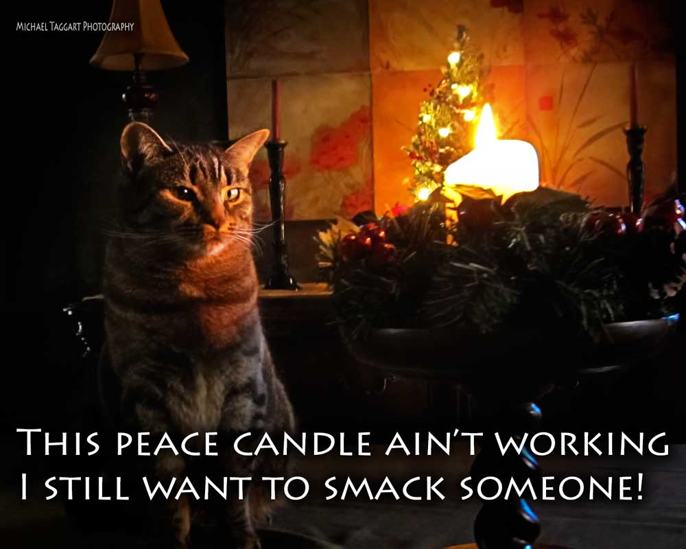 Peace Candle - Cats - Amazing Pictures by Michael Taggart Photography