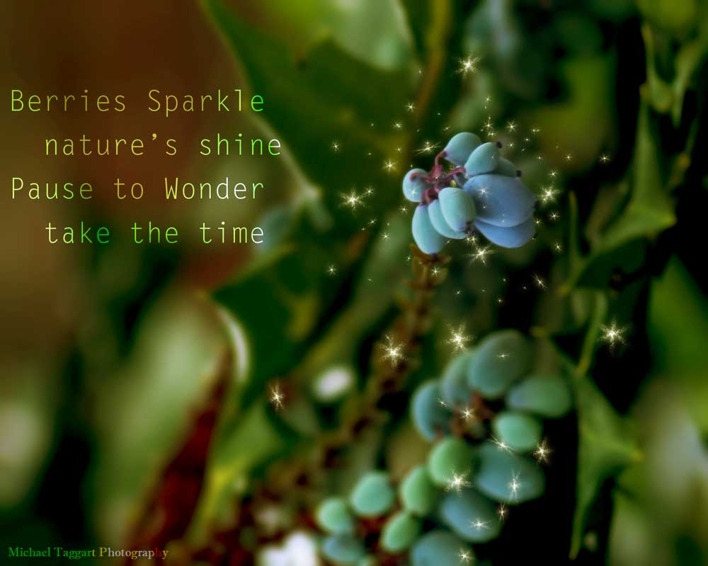 Berries Sparkle  - Flowers - Amazing Pictures by Michael Taggart Photography